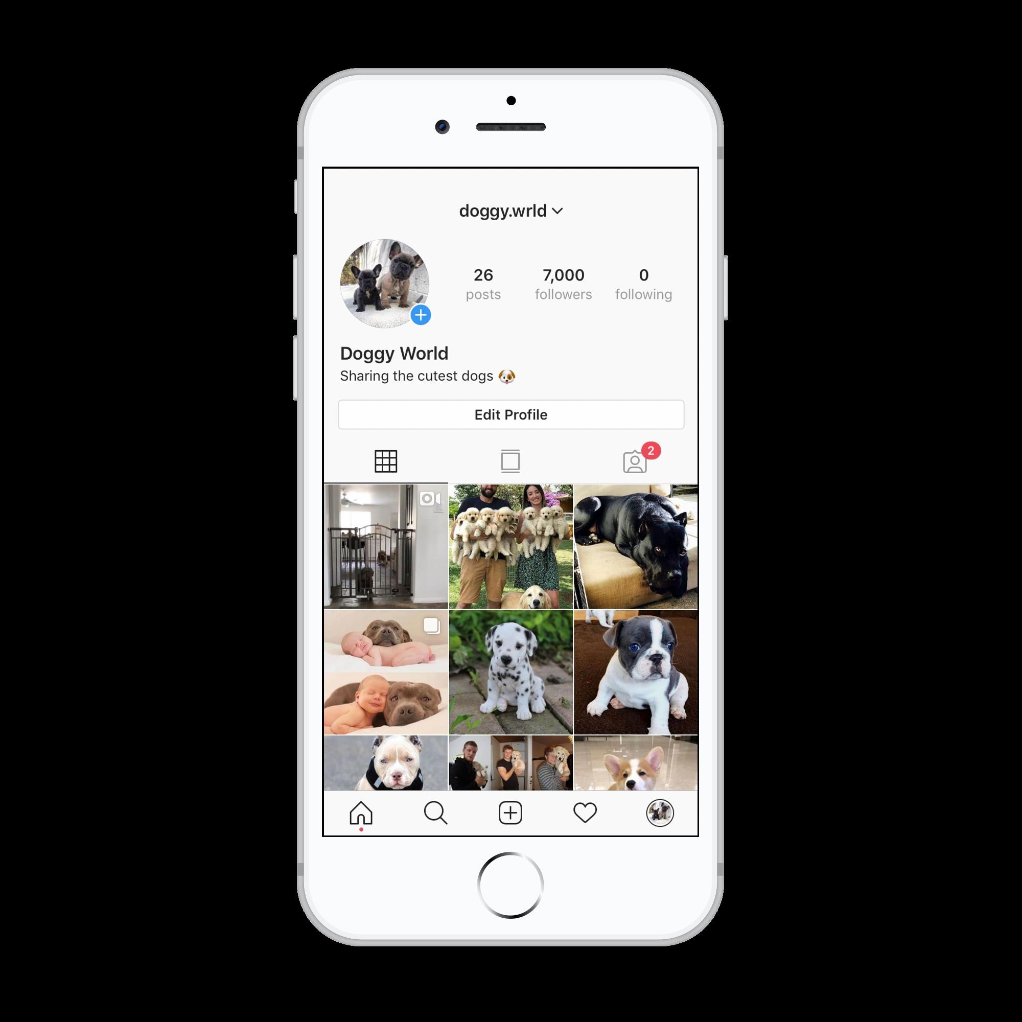 7k Dogs Instagram account