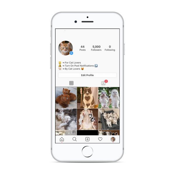 5k cats instagram account for sale